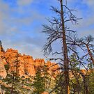 USA. Utah. Bryce Canyon National Park. Dead Tree. by vadim19