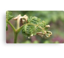 Spring forth Canvas Print