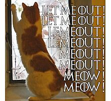Let me out, lemeout, meout, meow Photographic Print