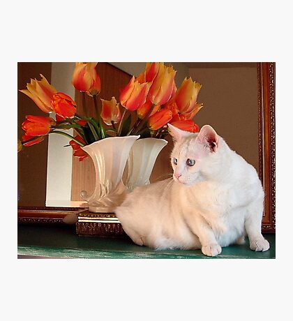 Snowball and the Tulips Photographic Print