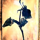 Wilting Rose 1 by Shelly Still