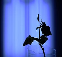 Wilting Rose In Blue by Shelly Still