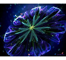 Blue silky flower Photographic Print