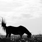 2.6.2016: Horse on Pasture by Petri Volanen