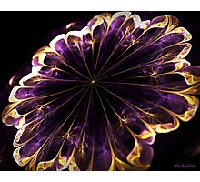 Purple silk and gold Flower Photographic Print