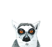 Lemur is watching you Photographic Print