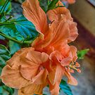 A Birthday Blossom by Bryan D. Spellman