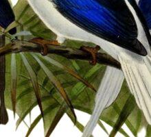 FF - Kingfishers - 1 Sticker