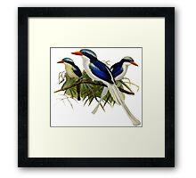 TIR-Kingfishers - 1 Framed Print