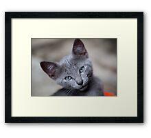 Cute little kitten Framed Print