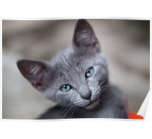 Cute little kitten Poster