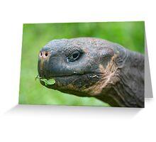 Giant Galapagos land turtle Greeting Card