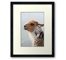 Portrait of beautiful Llama, Argentina Framed Print