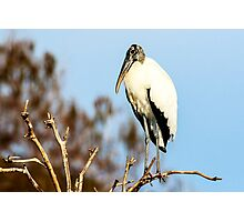 Wood Stork at Green Cay Wetlands Photographic Print