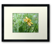 Build Me Up Buttercup Framed Print