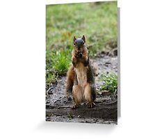 Please...one more peanut! Greeting Card