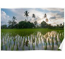 Green rice fields on Bali island, Jatiluwih near Ubud Poster