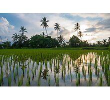 Green rice fields on Bali island, Jatiluwih near Ubud Photographic Print