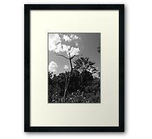 Death Framed Print
