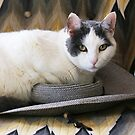 A Cat on a Hat by Alice Kahn