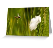 Feathery Flight Greeting Card