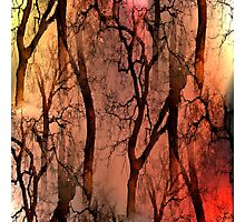 Glamour Trees (earth tones) Photographic Print