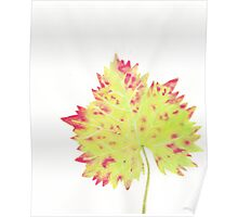 Watercolor Leaf Poster