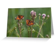 Tortoishelle Butterflies on Spear Thistle Greeting Card
