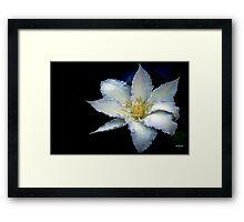 Bluish Clematis Framed Print