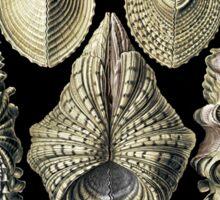 Golden Shells Sticker
