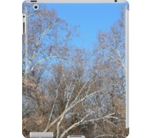 white bark tree iPad Case/Skin