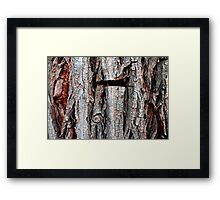 Weeping Willow Tree Bark Framed Print