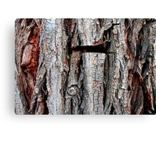 Weeping Willow Tree Bark Canvas Print