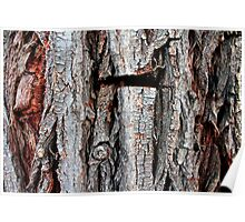 Weeping Willow Tree Bark Poster