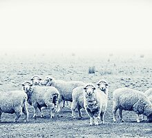 Sheep by ketut suwitra
