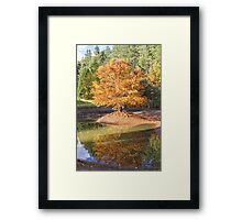 Swamp Cypress Reflections Framed Print