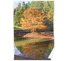 Swamp Cypress Reflections Poster