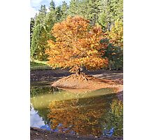 Swamp Cypress Reflections Photographic Print