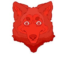 All Red Wolf  Photographic Print