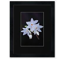 Paperwhite Winter Flowers Framed Print