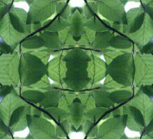 Leafy Green Sky Sticker