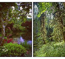 VANCOUVER ISLAND DIPTYCH by Priscilla Turner