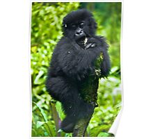 Playful Primate Poster