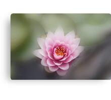 Lotus Flower (Nelumbo nucifera) Canvas Print