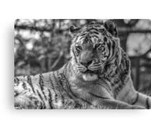 Hybrid Tiger (B&W 2) Canvas Print
