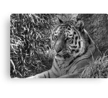 Amur Tiger (B&W 2) Canvas Print