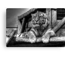 Amur Tiger (B&W 3) Canvas Print