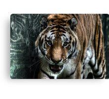 Hybrid Tiger (1) Canvas Print