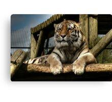 Amur Tiger (1) Canvas Print