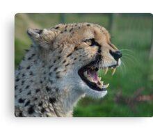 Smiley Cheetah Canvas Print